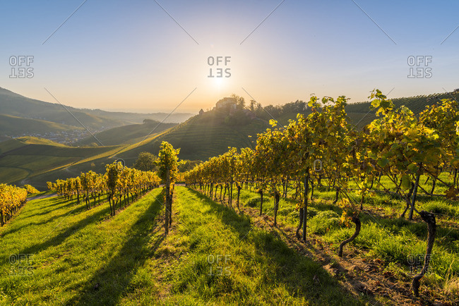 Durbach, Freiburg region, Black Forest (Schwarzwald), Baden-W�rttemberg, Germany. Vineyards and Staufenberg Castle.