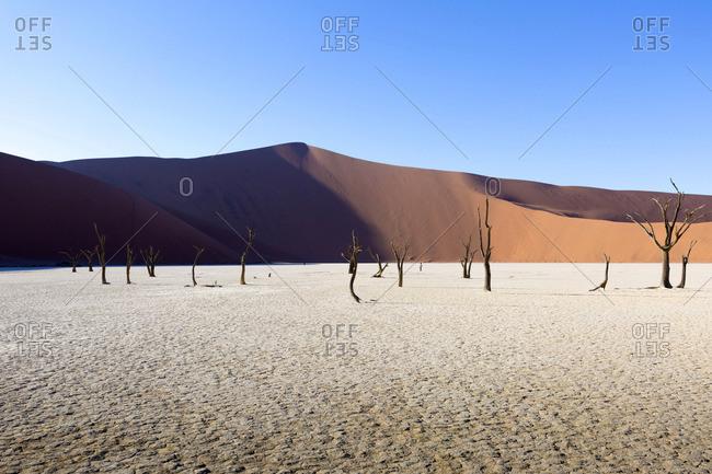 Dead Vlei, Sosussvlei, Namibia, Africa