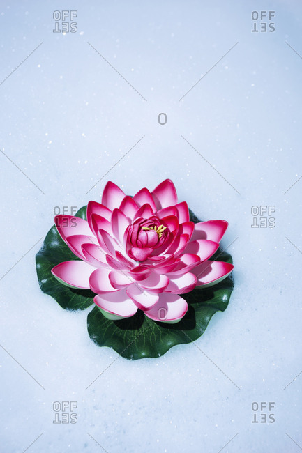 Artificial water lily in bath foam
