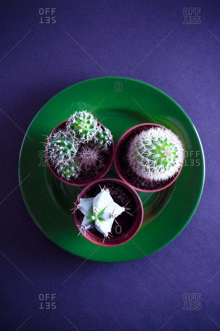 Three cacti on green plate