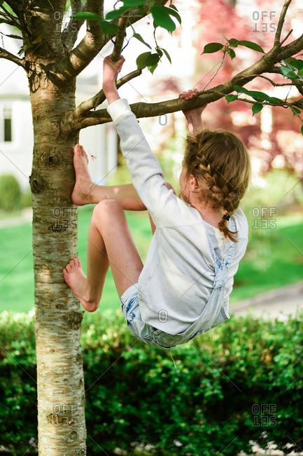 Girl climbing a tree - Offset