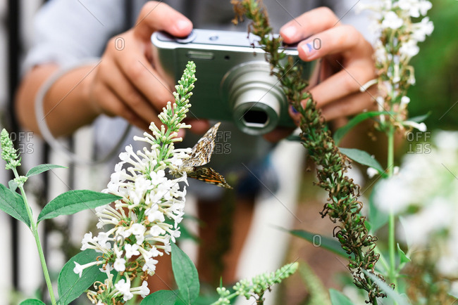 Butterfly perched on a flower with person holding camera in background