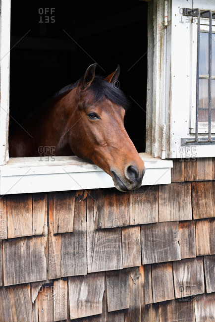 Brown horse looking out stable window