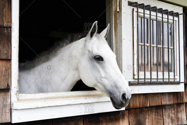 Horse looking out stable window