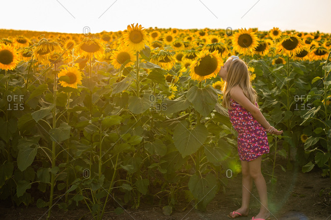 Girl smelling sunflowers in a field