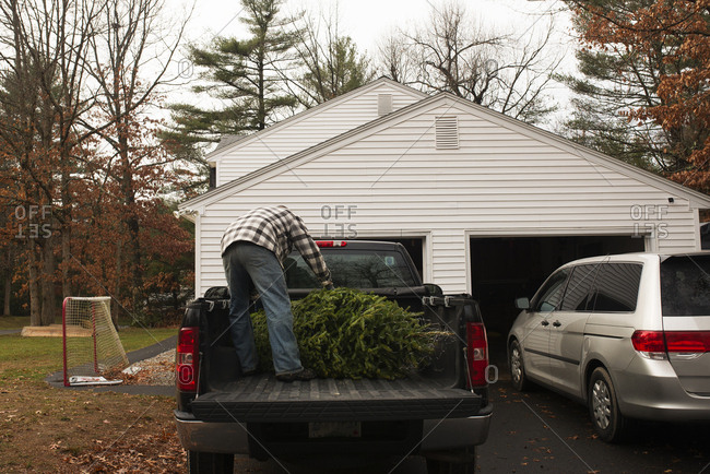 Man standing in truck bed unloading Christmas tree