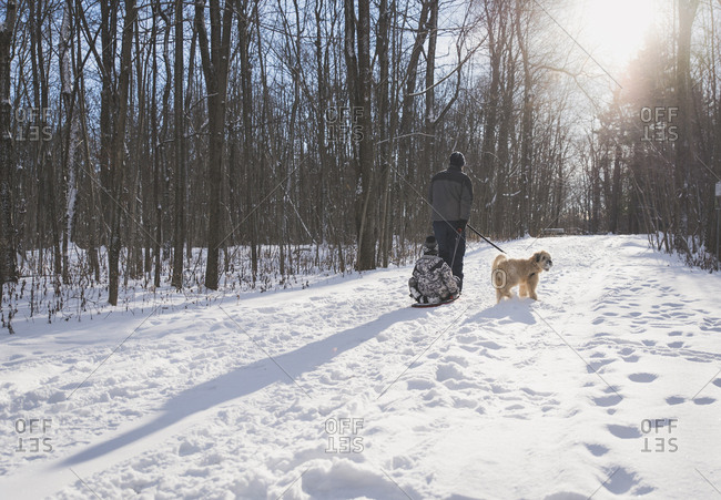 Rear view of father pulling sled with son by dog on snowy field against bare trees