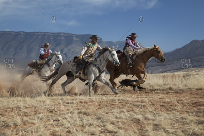 USA, Wyoming, Shell, The Hideout Ranch, Three Cowboys on Galloping Horses