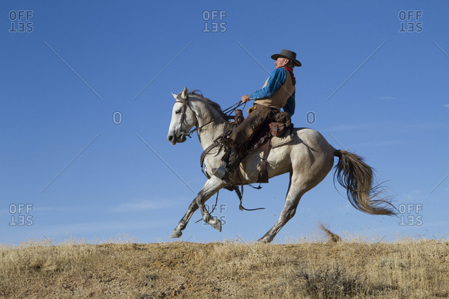 USA, Wyoming, Shell, The Hideout Ranch, Cowboy Suddenly Reining in His Horse