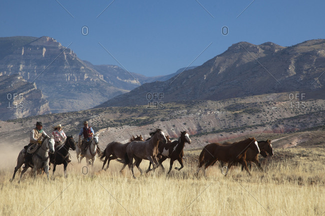 USA, Wyoming, Shell, The Hideout Ranch, Cowboys and Cowgirl Driving the Horses