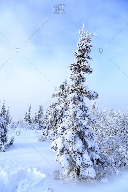 Snowy scenic along Ester Dome Road, Fairbanks, Alaska, USA