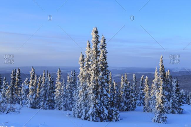 Snow scenic near Fairbanks, Alaska, USA