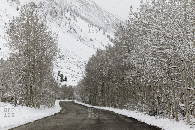 USA, California, Sierra Nevada Range, Mountain road and aspen trees in winter