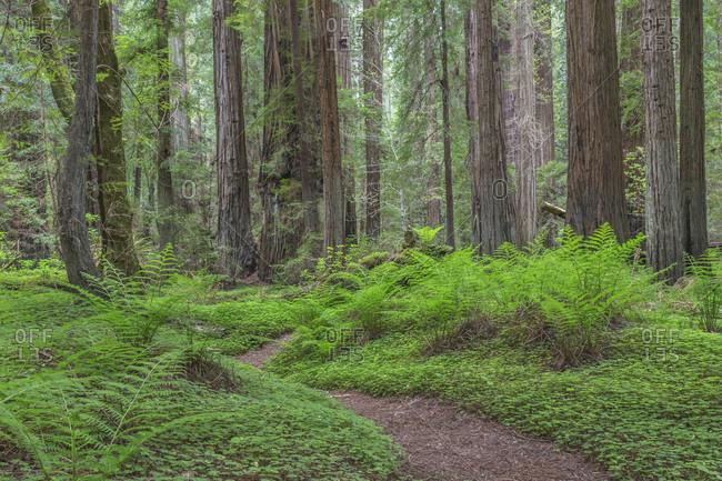 USA, California, Humboldt Redwoods State Park