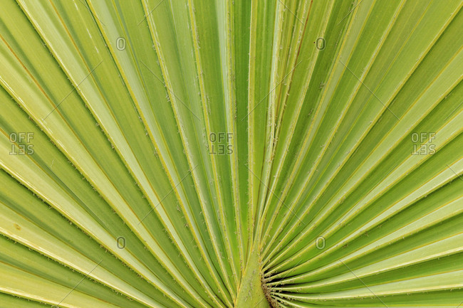 Close-up of palm fronds, San Diego, California