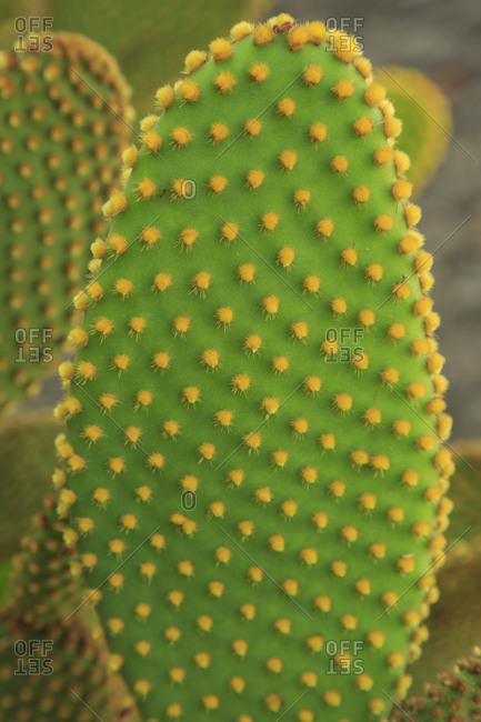 Desert Garden, Balboa Park, San Diego, California, USA