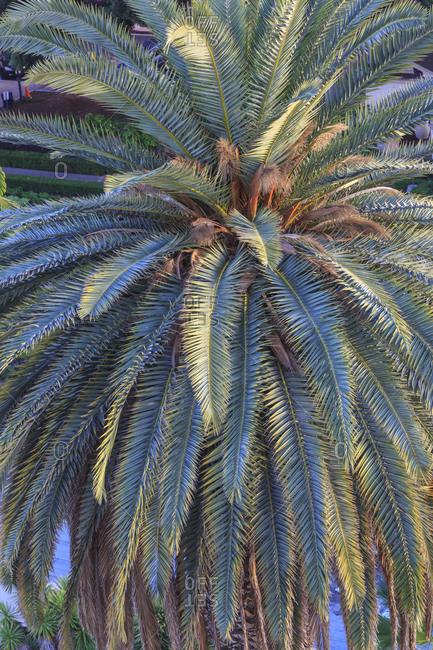 Palm tree, Balboa Park, San Diego, California, USA