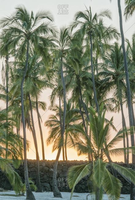 USA, Hawaii, Pu'uhonua O Honaunau National Historic Park, Place of Refuge, Big Island Sunset