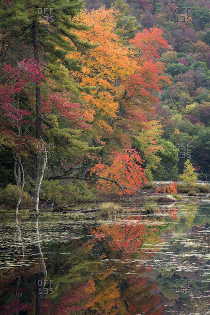 USA, New York State, Autumn trees reflected in Oxbow Lake Outlet, Adirondack Mountains