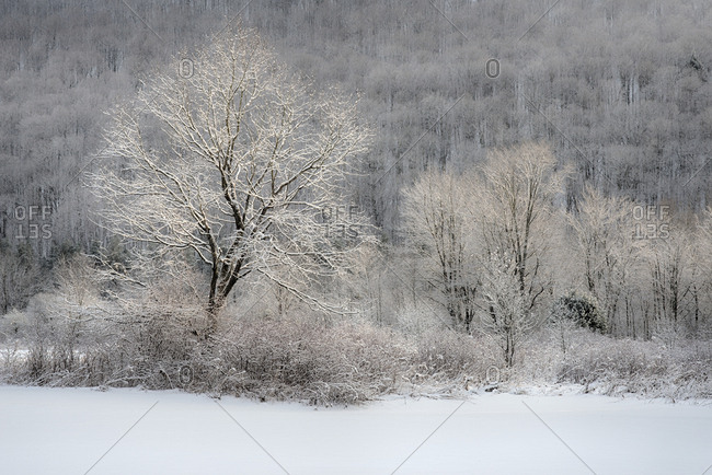 USA, New York State, Morning sunlight on snow covered trees, Labrador Hollow Unique Area