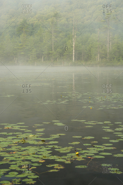 USA, New York State, Morning mist on Labrador Pond, Labrador Hollow Unique Area