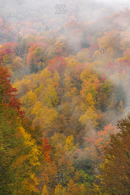 USA, North Carolina, Overview of forest in autumn color