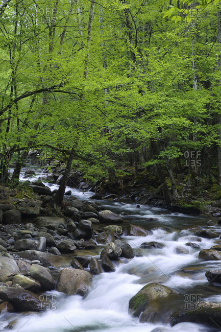 USA, Tennessee, Great Smoky Mountains National Park, Creek cascade landscape