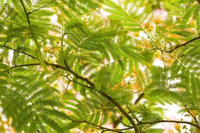 Green plant leaf patterns, Seattle, Washington State