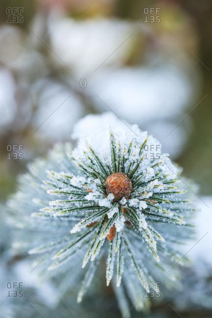 January Snow in Mill Creek, Washington State neighborhood