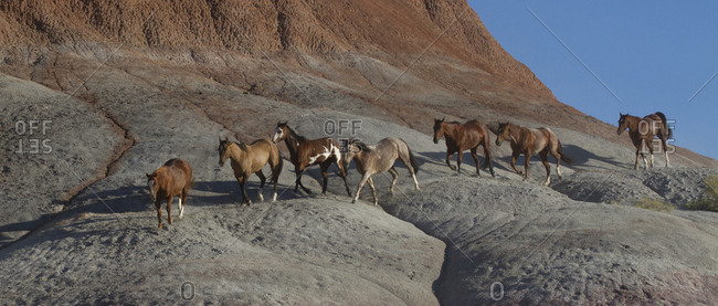 USA, Wyoming, Shell, The Hideout Ranch, Horses Walking the Hillside