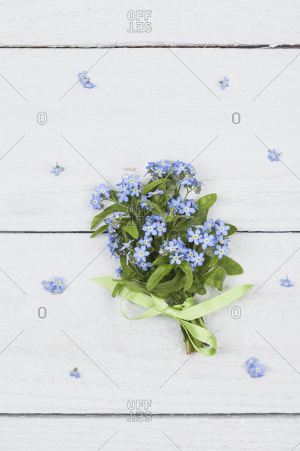 Bunch of Forget-me-not on white ground