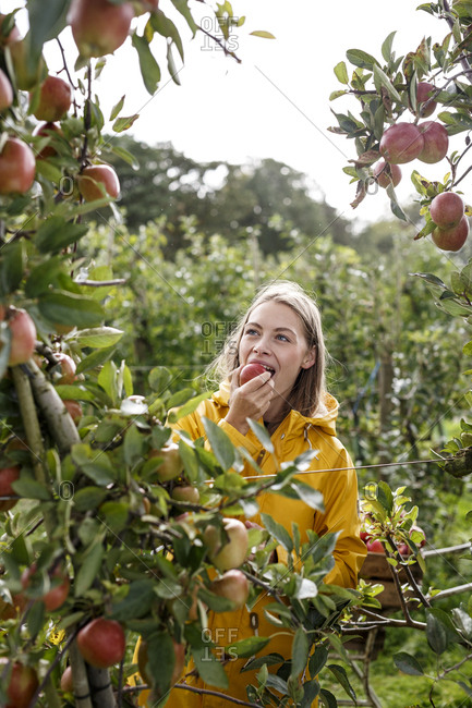 Young woman eating apple from tree in orchard