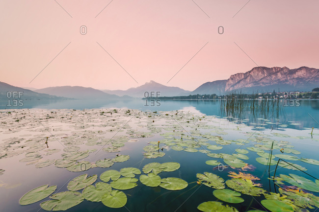 Austria- Lake Mondsee- Water Lilies in the morning