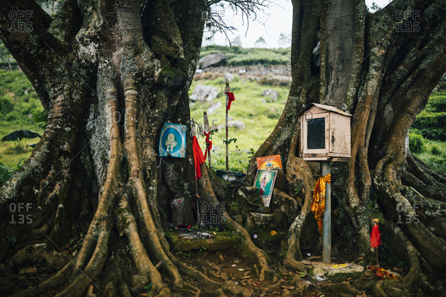 Ella, Sri Lanka - February 3, 2018: Small Hindu shrine set on the roots of two trees at a tea plantation