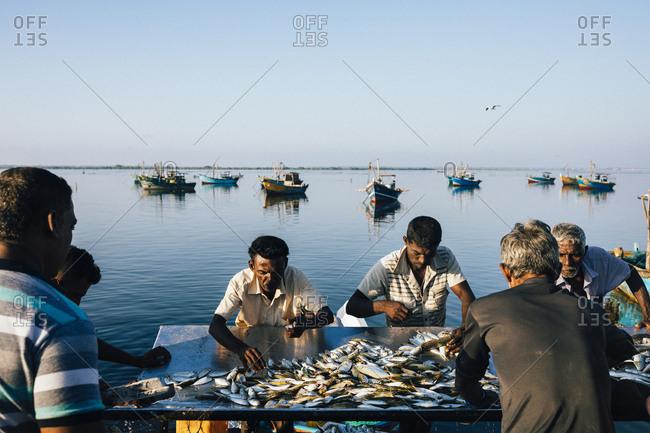 Jaffna, Sri Lanka - February 9, 2018: Fishermen sorting morning catch with still waters of bay in background