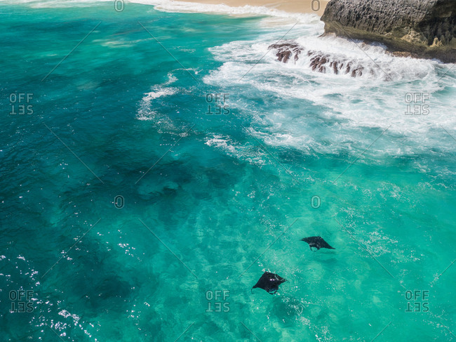 Aerial view of two mantarays off Island Nusa Penida, Indonesia.