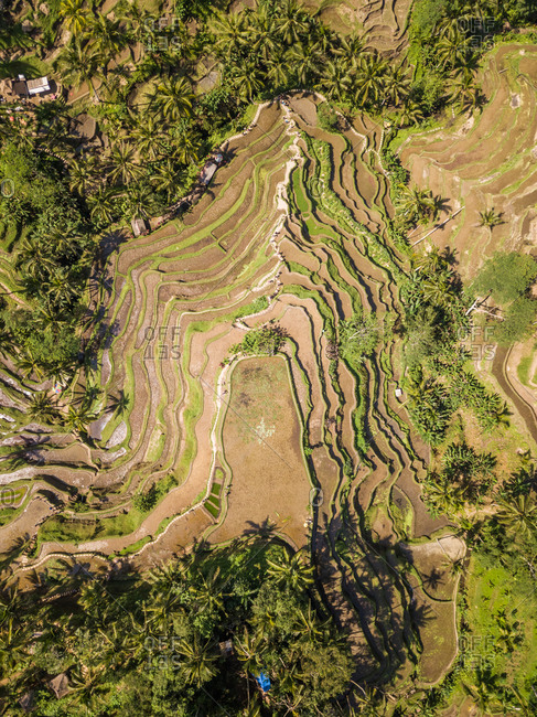 Aerial view of rice terrace in Bali, Indonesia.
