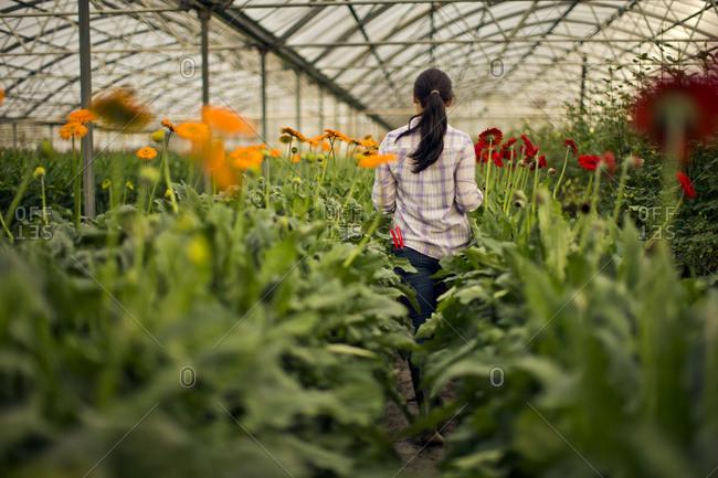 Teenage girl working in a greenhouse