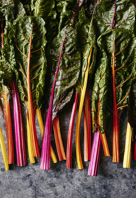 Freshly picked rainbow chard with multicolored stems