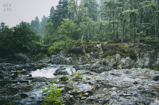 Mountain stream river fast flowing rainy forest