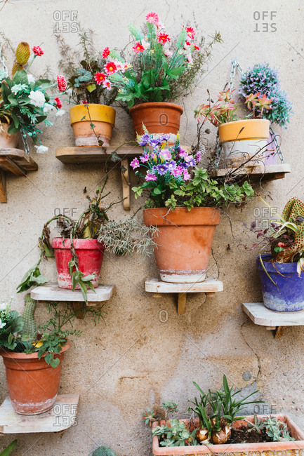 Potted flowers and plants on outside shelves