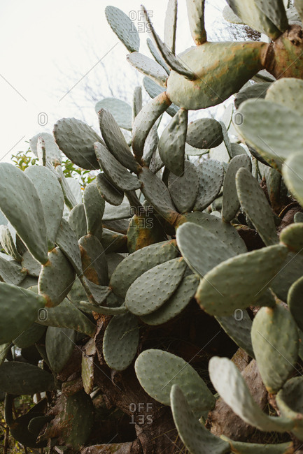 Close up of cactus, Barcelona, Spain