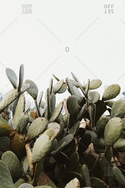 Cactus, Barcelona, Spain