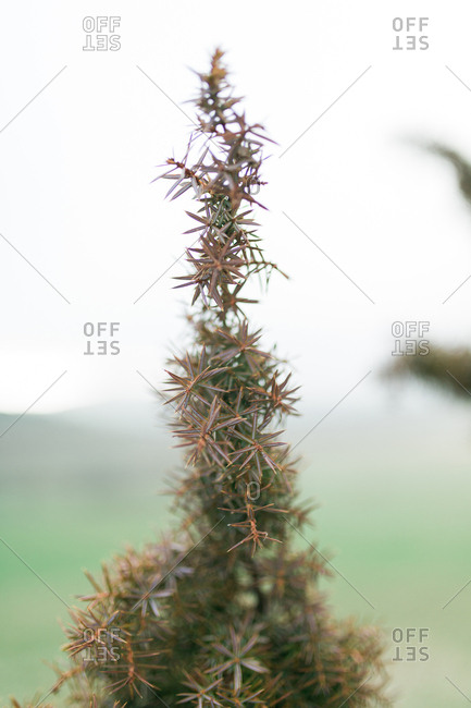 Close up of a spiny plant