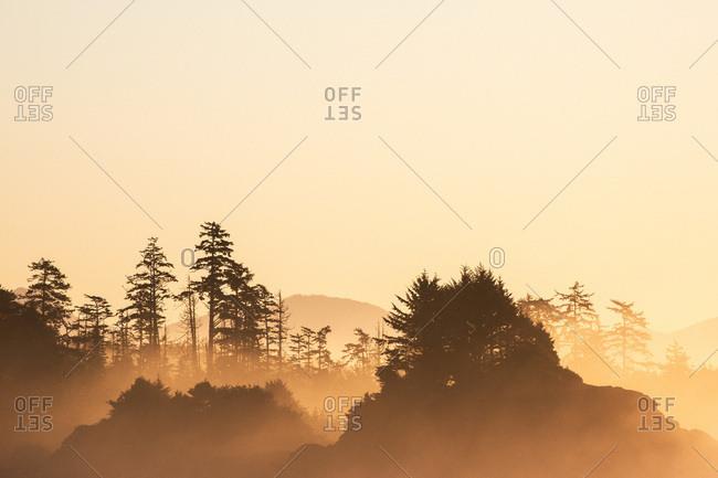 Fiery sunrise illuminating misty forest scene