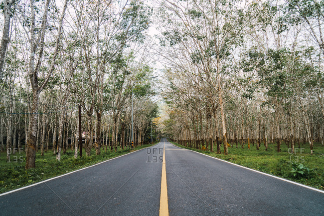Perspective view to asphalt road in green spring forest.