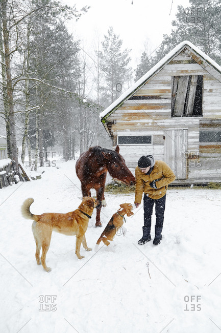 Man feeding dogs and horse with rusks outside in wintertime
