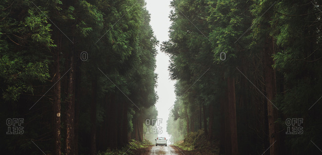 Beautiful view of lonely car on road among huge green lush trees in misty forest.