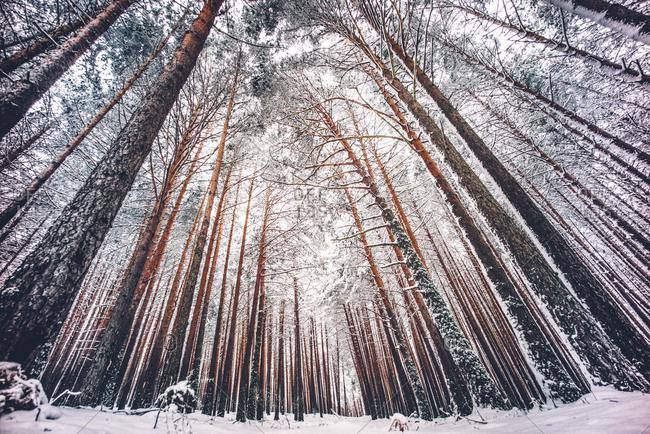 Snowy winter forest landscape