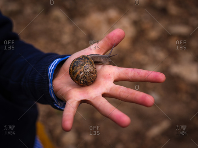 Crop hand holding big snail